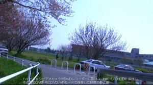 DVD-VRモードの桜並木