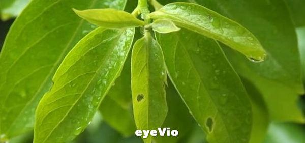 eyeVioの映像1