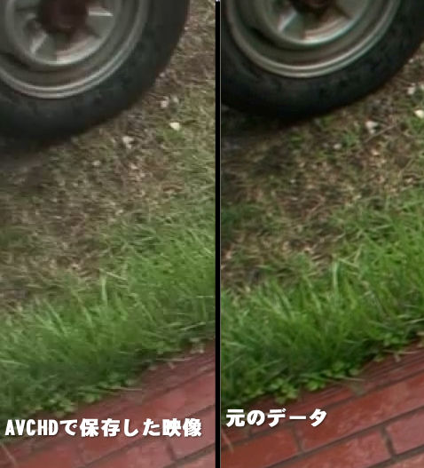 芝生の比較