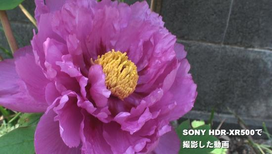 SONY HDR-XR500で撮影した動画